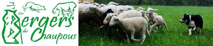les bergers des Chaupous